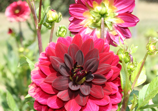 The skinny on flower bulbs flower bulb crazy - Flowers that bloom in autumn ...