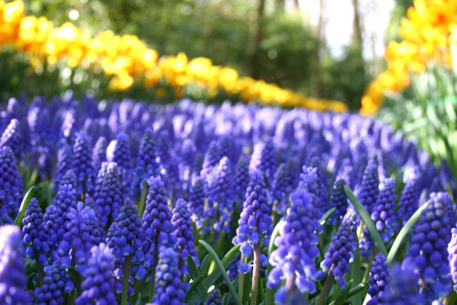 Ground Cover And Border Tips Ideas Flower Bulb Crazy