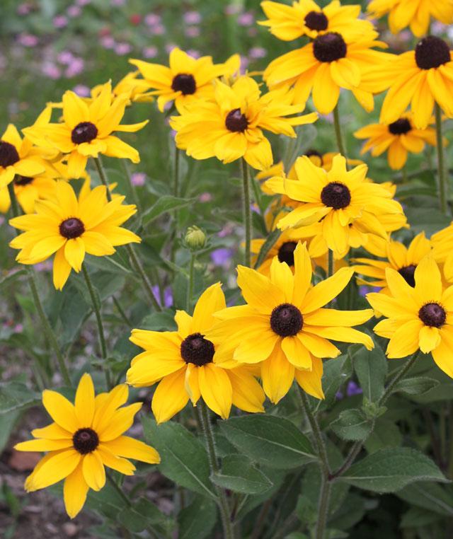 Mariposa y abeja que atraen las flores para su jardín