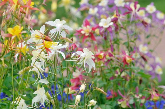 Flores para mariposas y toros; UtilidadGardener.com