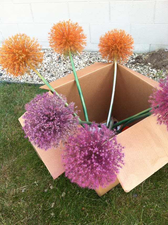 Cool craft ideas with allium stems flower bulb crazy for 101 crazy crafting ideas