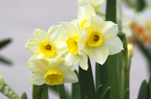 Warm Climates And Fall Planting Bulbs Flower Bulb Crazy