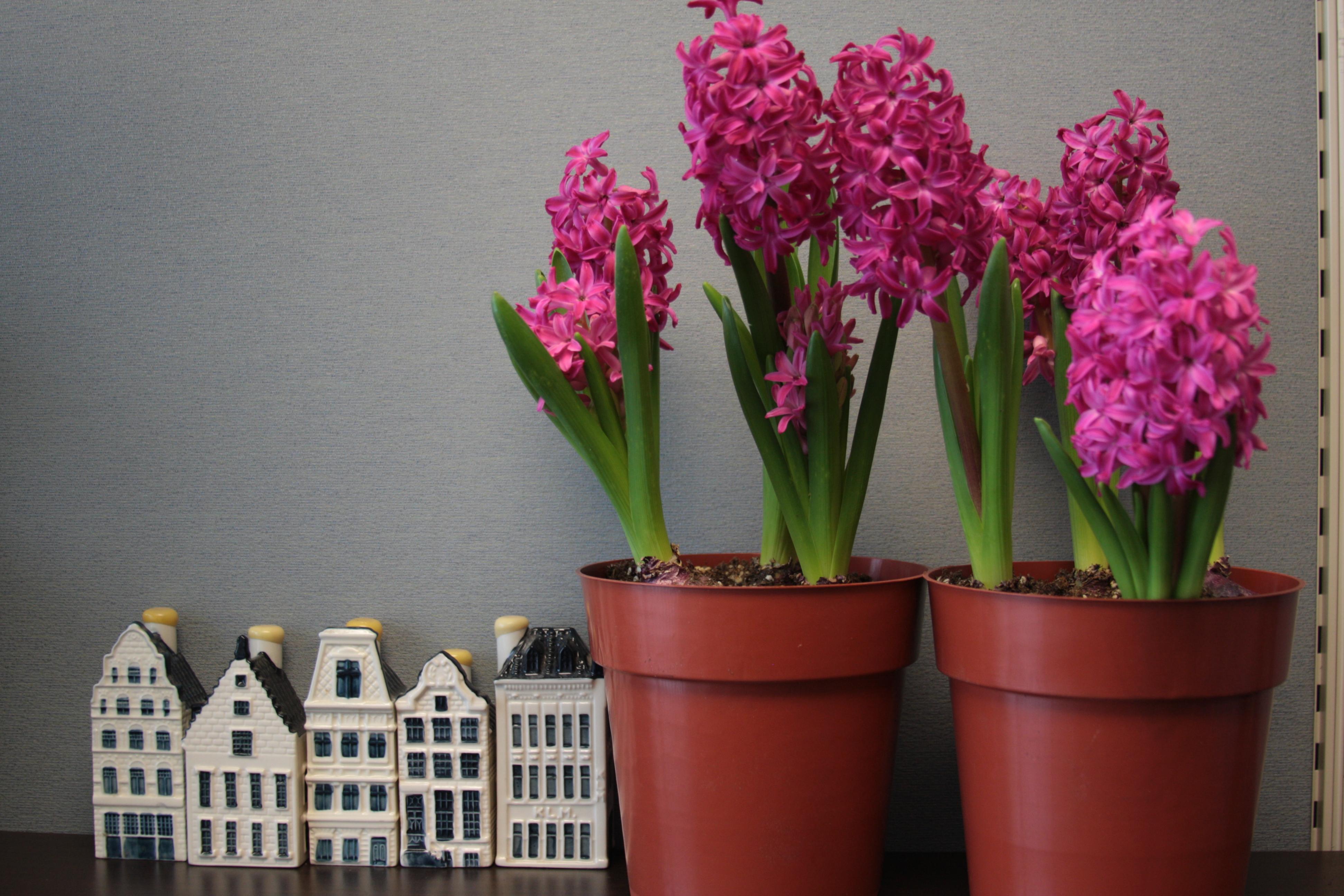garden design garden design with winter flowering plants lisa cox